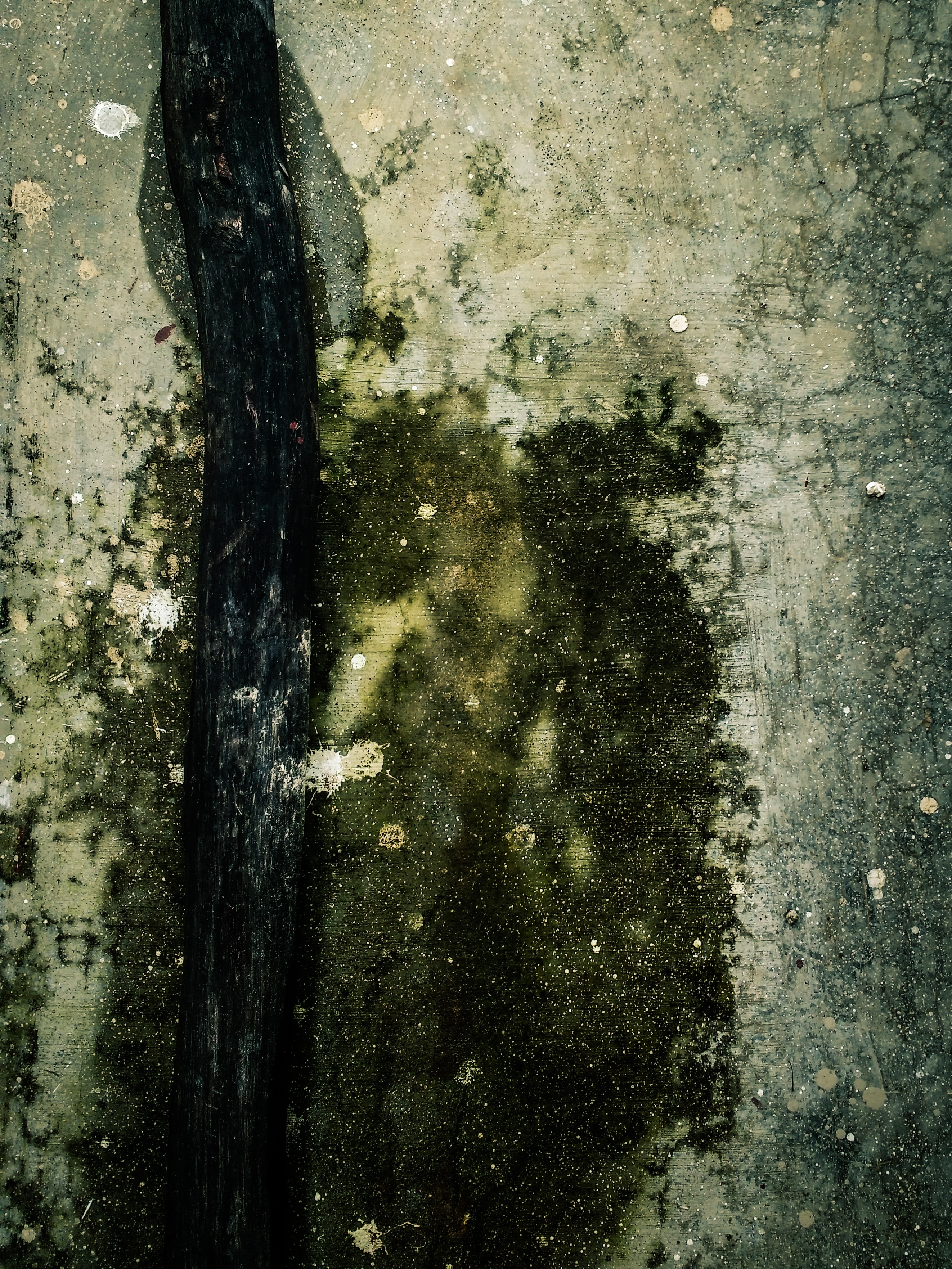 Common Problem: Mold & Mildew
